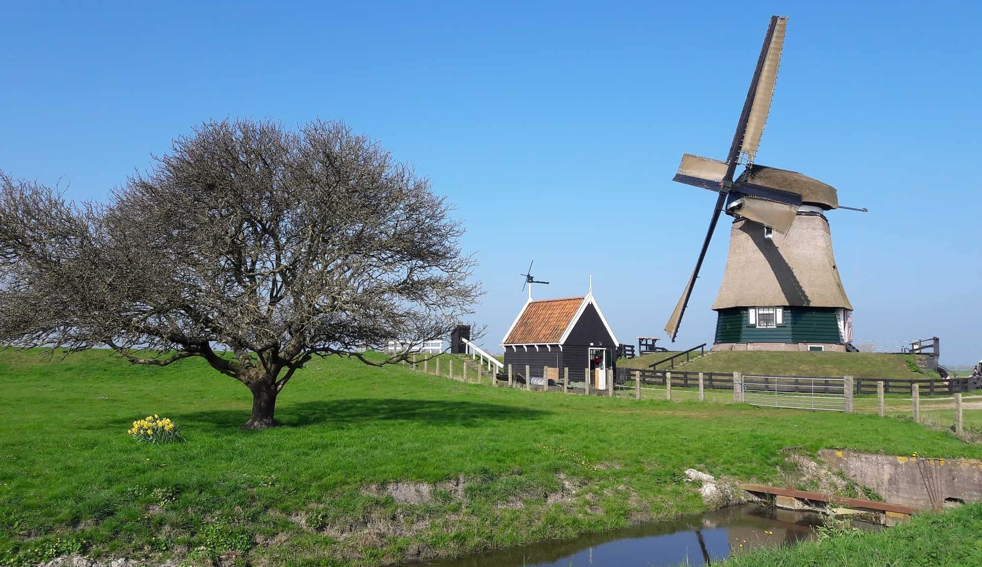 Low Holland